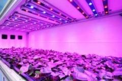led-grow-light3-300x185