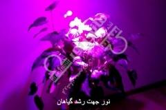 نور جهت رشد گیاهان