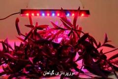 نورپردازی گیاهان