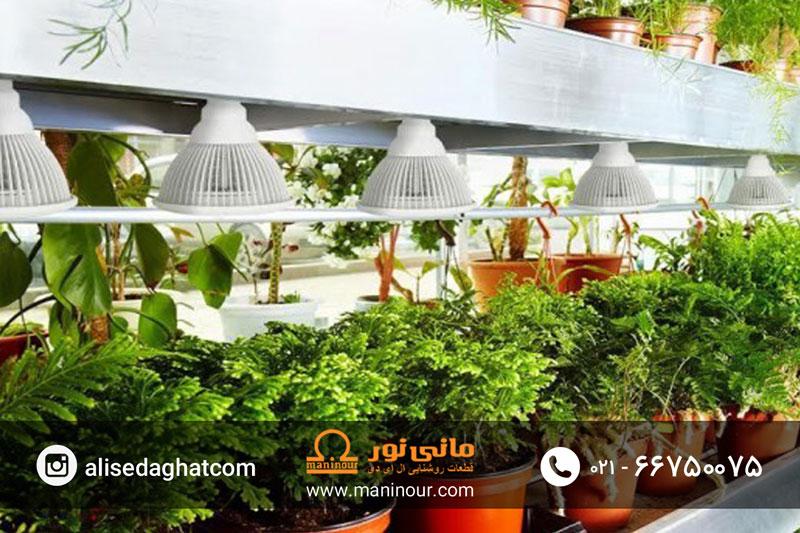 لامپ پرورش گیاه