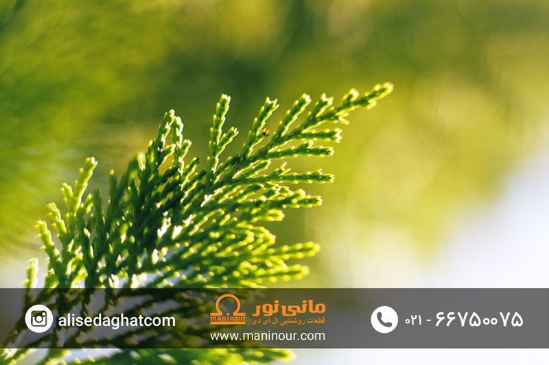 نور مصنوعی برای رشد
