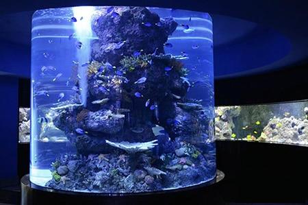 نور در آکواریوم ماهی آب شور