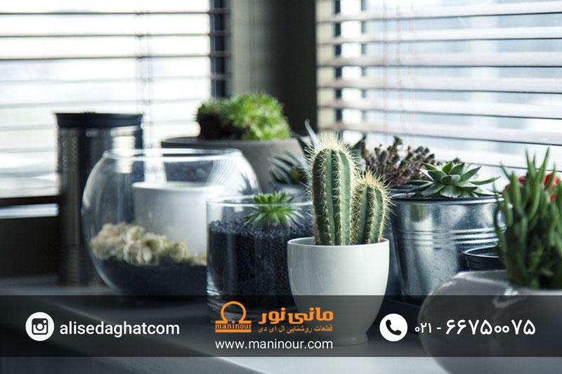 لامپ رشد گیاه کاکتوس
